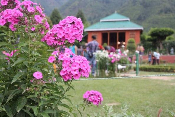 Chashma Shahi, Srinagar.