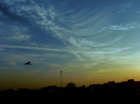 Morning Landscape Photography